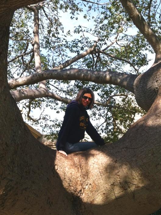 WG-Kapok Tree