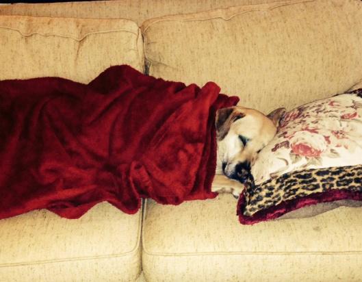 Lexi sleeping
